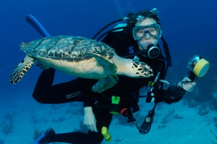 featured-turtle-diver
