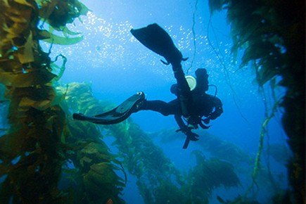Diving the kelp beds. Photo courtesy Jerry Jones, IWD Photograpy.